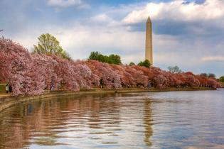 top attractions, travel guides,trip plans, local deals in Washington DC